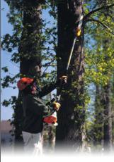 gas tree pruner